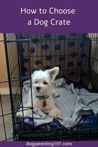 How to Choose a Dog Crate