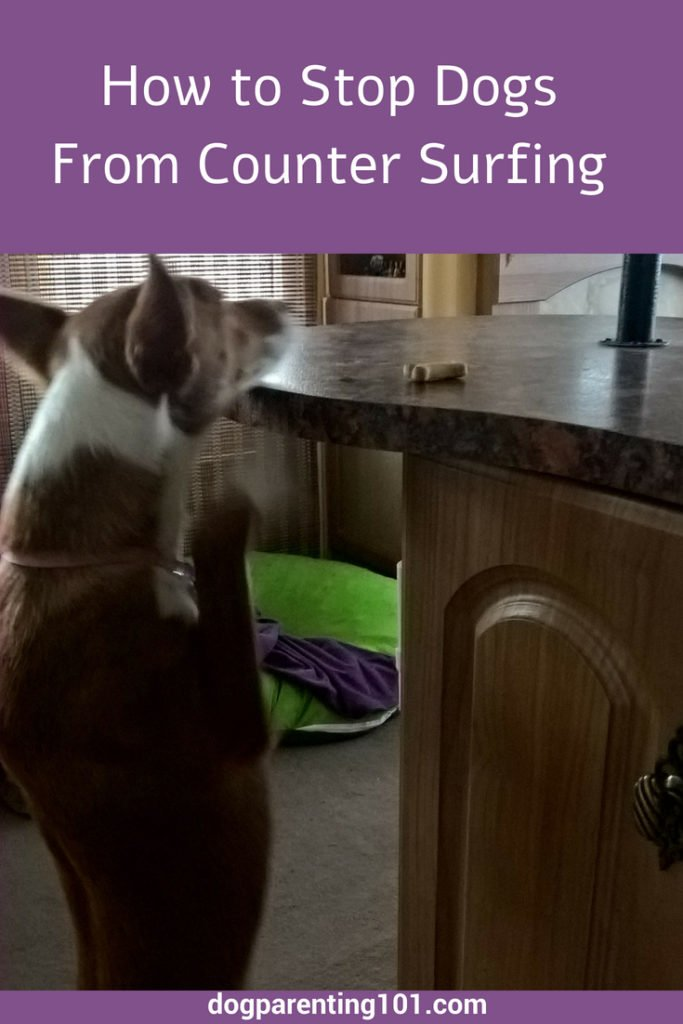 How to Stop Dogs From Counter Surfing