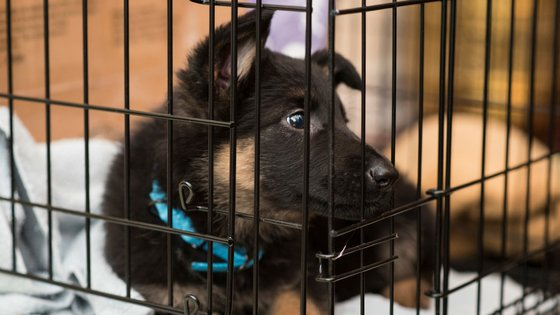 how to choose a dog crate for your pup