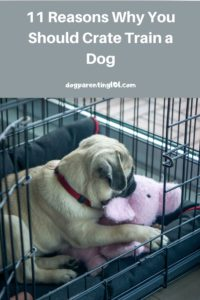 11 Reasons Why You Should Crate Train a Dog