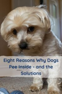 Eight Reasons Why Dogs Pee Inside and the Solutions