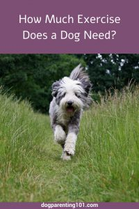 How Much Exercise Does a Dog Need