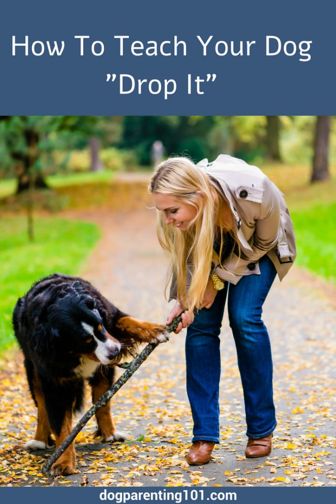 How To Teach Your Dog Drop It
