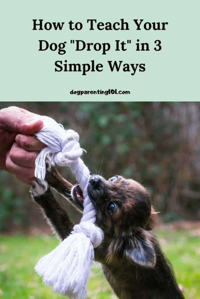 How to Teach Your Dog Drop It in 3 Simple Ways