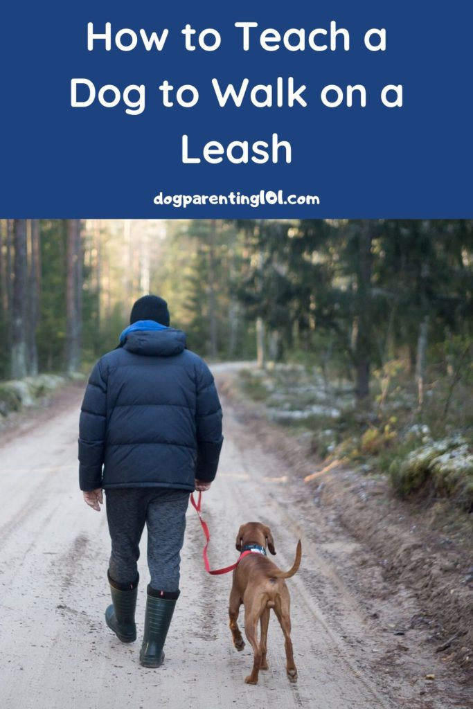 How to Teach a Dog to Walk on a Leash