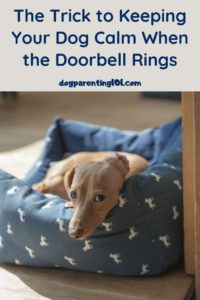 The trick to keeping your dog calm when the doorbell rings