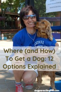 Where and How To Get a Dog 12 Options Explained