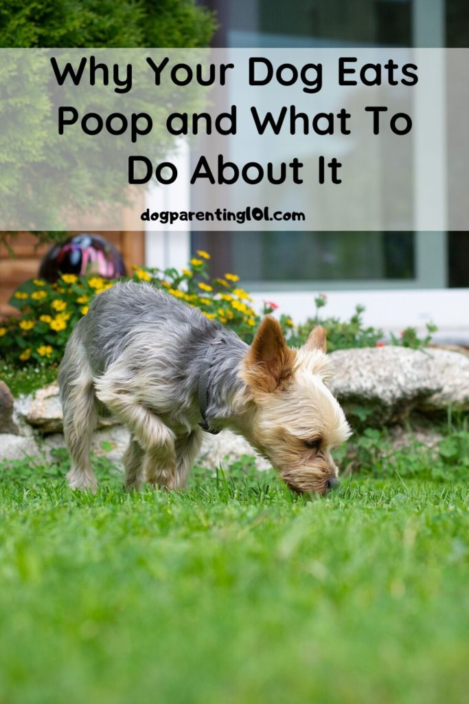 Why Your Dog Eats Poop and What to do About It