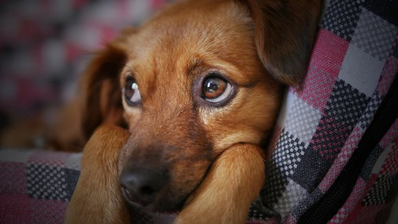 how do I stop a puppy crying