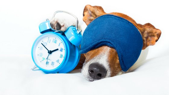 Is it important to have a daily dog schedule