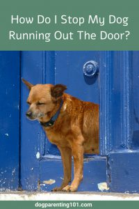 How do I Stop My Dog Running Out The Door