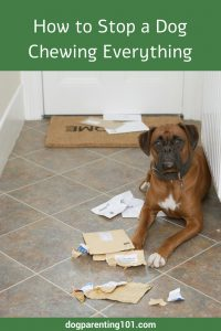 How to Stop a Dog Chewing Everything