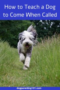How to Teach a Dog to Come When Called