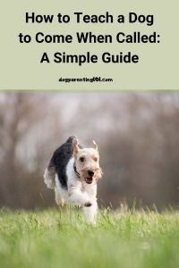 How to Teach a Dog to Come When Called A Simple Guide