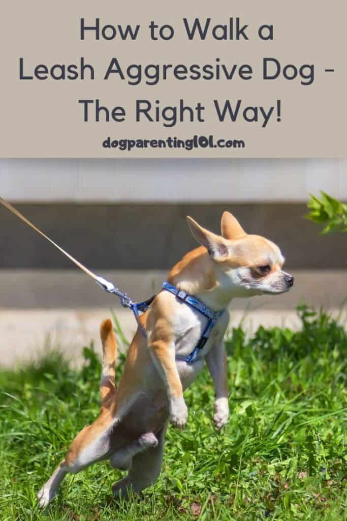 How to Walk a Leash Aggressive Dog the Right Way