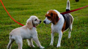 How to stop on leash aggression