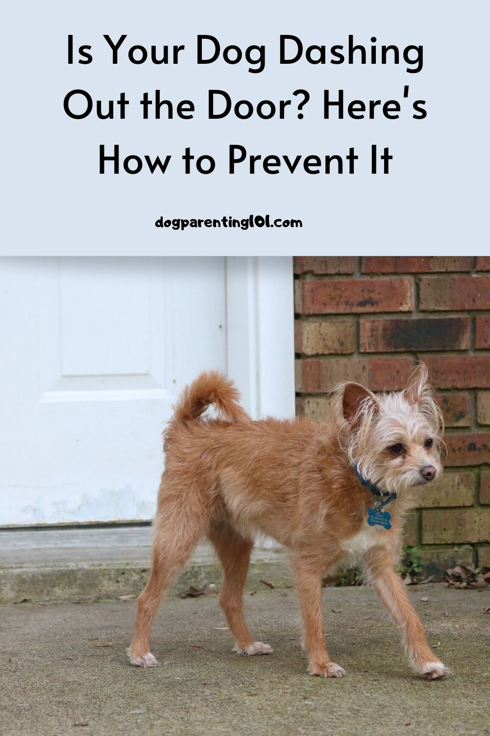 Is Your Dog Dashing Out the Door Here's How to Prevent It