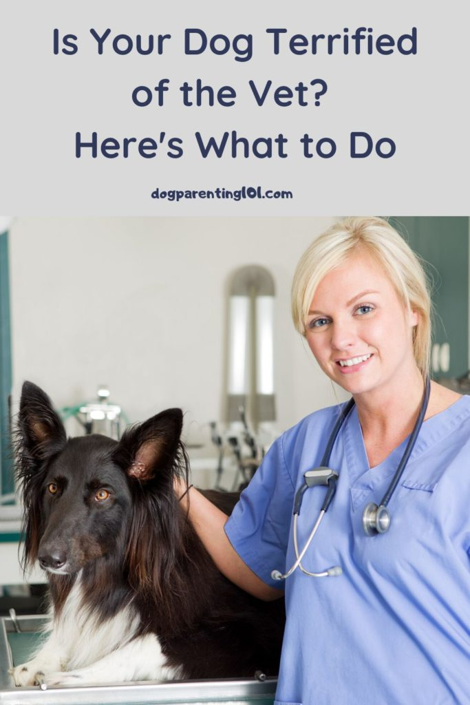 Is Your Dog Terrified of the Vet Here's What to Do
