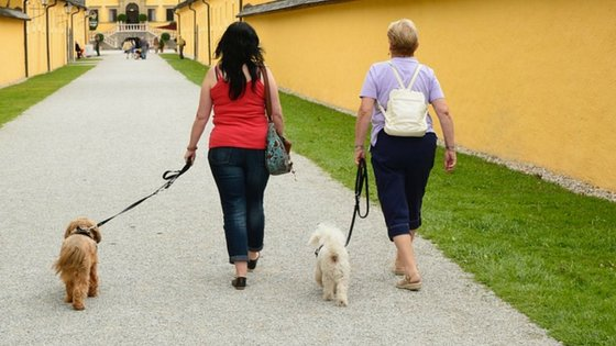 desensitisation training for a leash aggressive dog