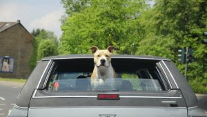 what is the best way to keep my dog safe in the car