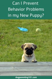 Can I Prevent Behavior Problems in my New Puppy_