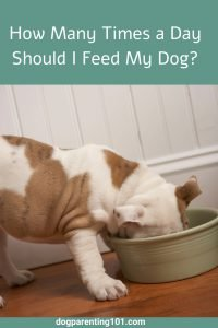 How Many Times a Day Should I Feed my Dog