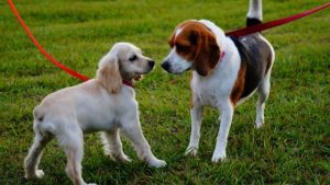 How to prevent behavior issues in puppies