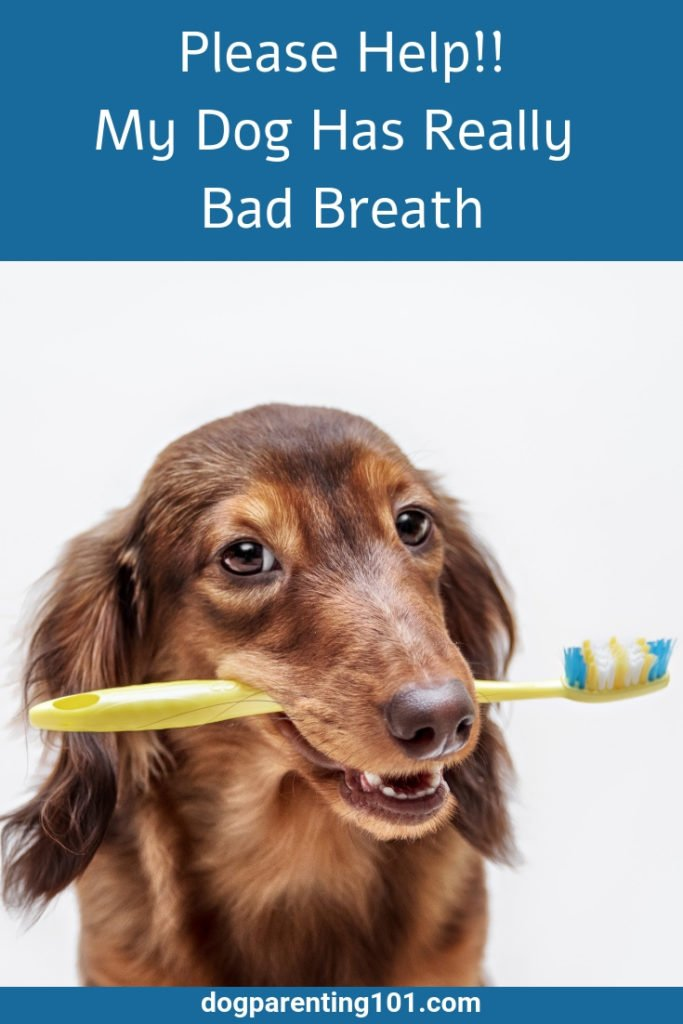 Please Help My Dog Has Really Bad Breath