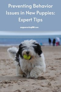 Preventing Behavior Issues in New Puppies Expert Tips