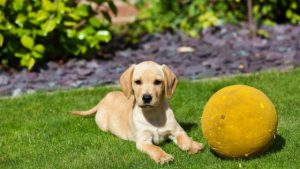 can I prevent behavior problems in my new puppy