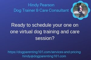 virtual dog training service