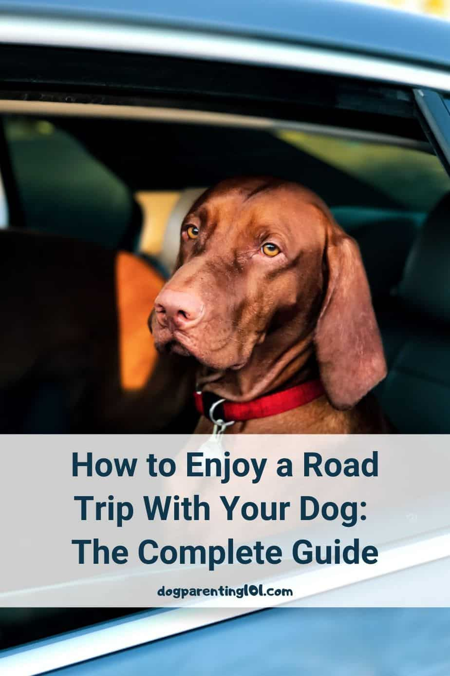 How to Enjoy a Road Trip With Your Dog The Complete Guide