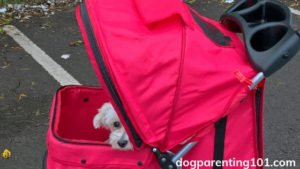 How to choose the best pet stroller for your dog