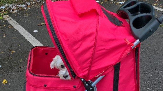 How to choose the right dog stroller for your dog