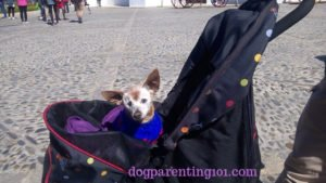 How to choose the right pet stroller for your dog
