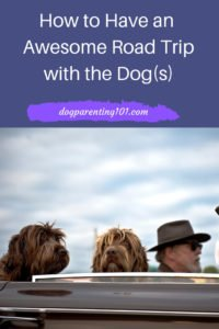 How to have an awesome road trip with the dog