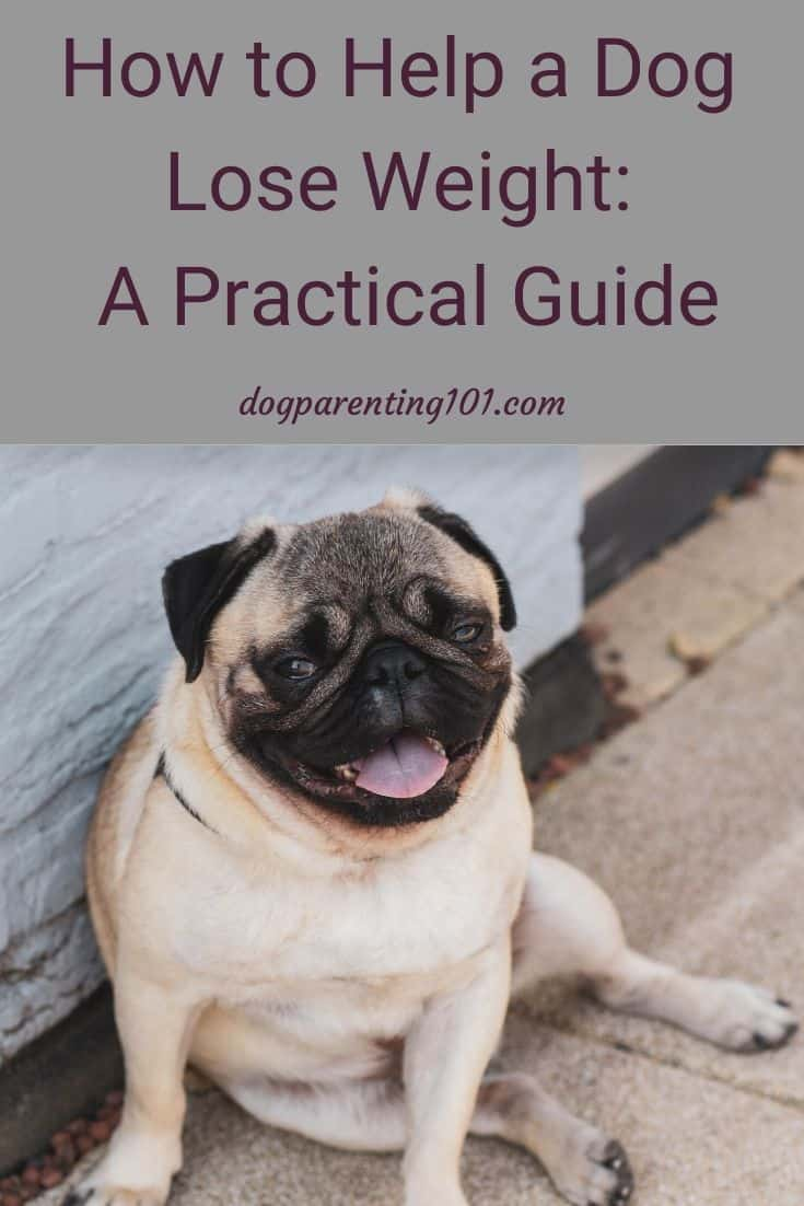 How to help a dog lose weight a practical guide