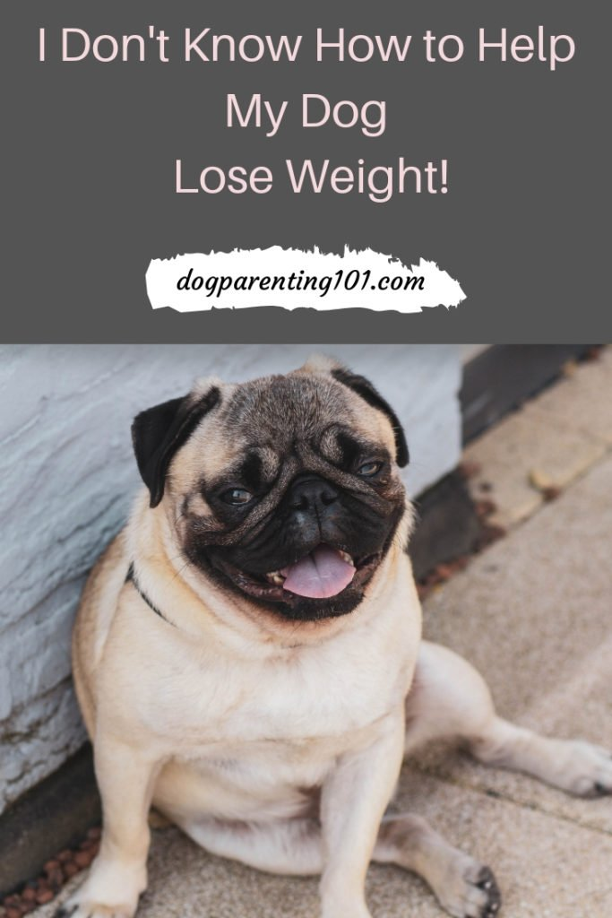 I don't know how to help my dog lose weight