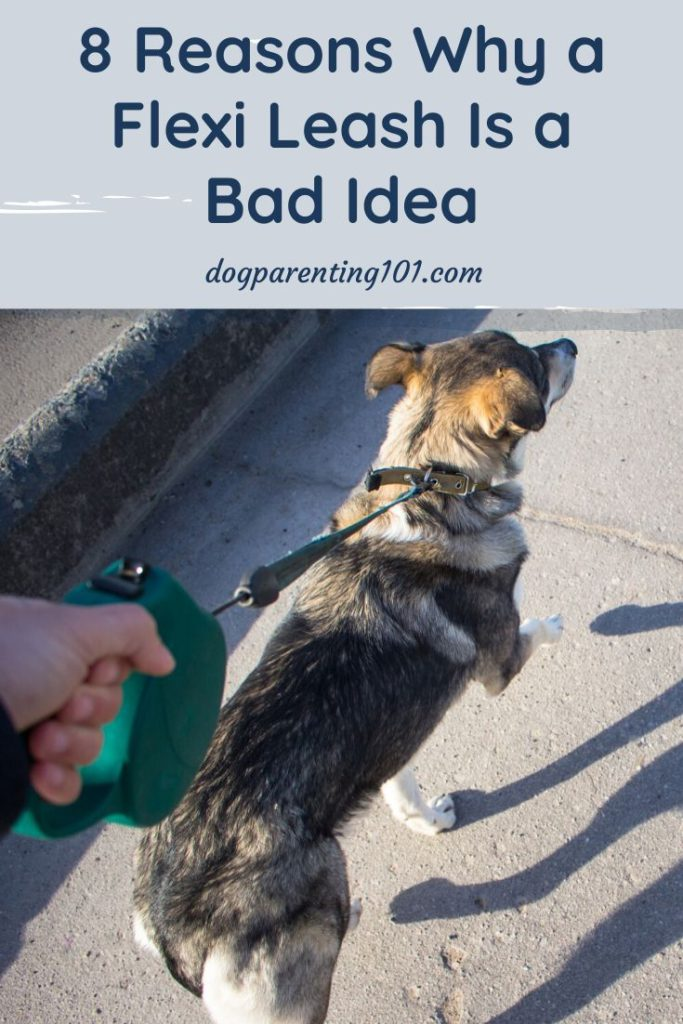 8 Reasons Why a Flexi Leash is a Bad Idea