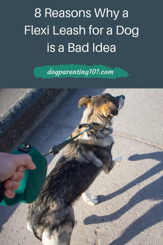 8 Reasons Why a Flexi Leash for a Dog is a Bad Idea