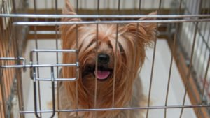 How to choose the right size crate for your dog