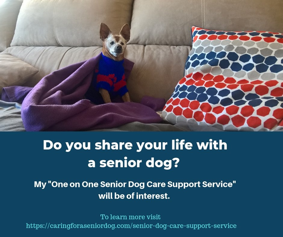 Senior Dog Care Support Service