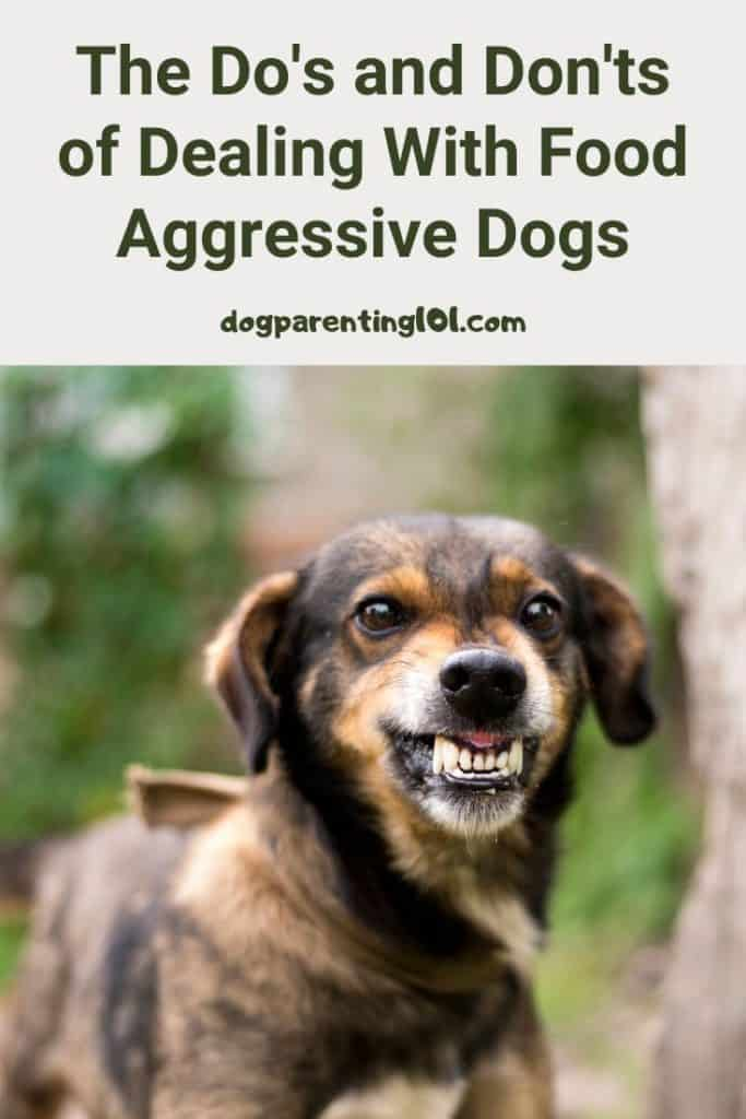 The do's and don'ts of dealing with food aggressive dogs