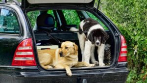 What is the best car ramp for large dogs