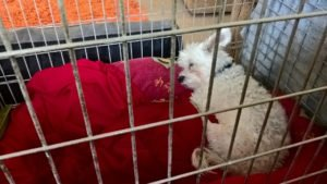 Which is the right dog crate size to buy