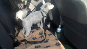 car restraints for dogs