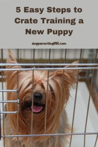 5 Easy Steps to Crate Training a New Puppy