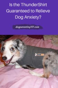 Is the ThunderShirt Guaranteed to Relieve Dog Anxiety