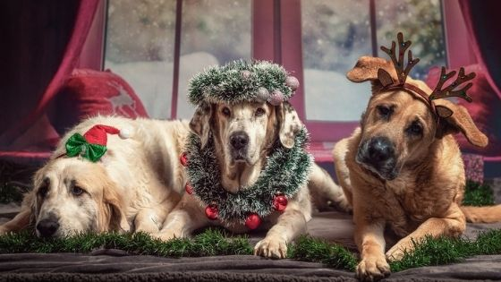 How to make your home safe for an old dog at Christmas
