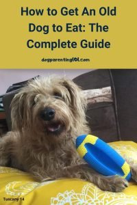 How to Get An Old Dog to Eat The Complete Guide